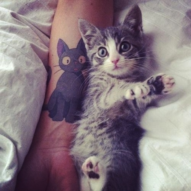 Cool Cat Tattoos  Damn Pictures