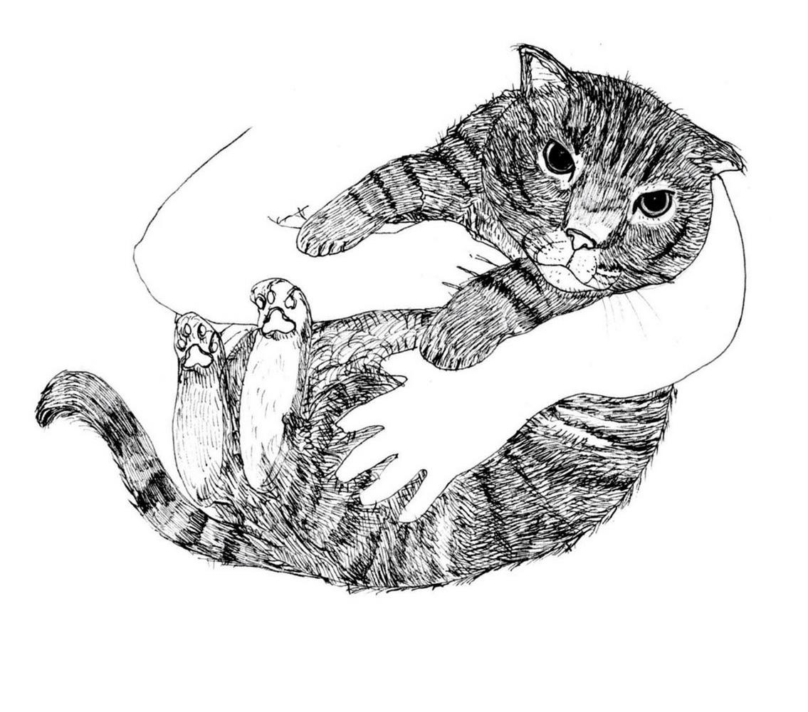 Cat - Boogie