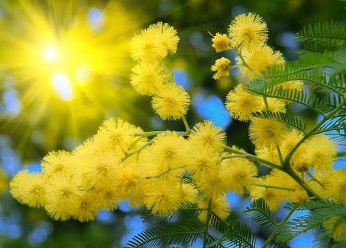 загадки про цветы весной для детей