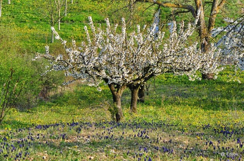l'élégante au muscari, Elegant lady with blue flowers, Кокетка с гадючим луком.