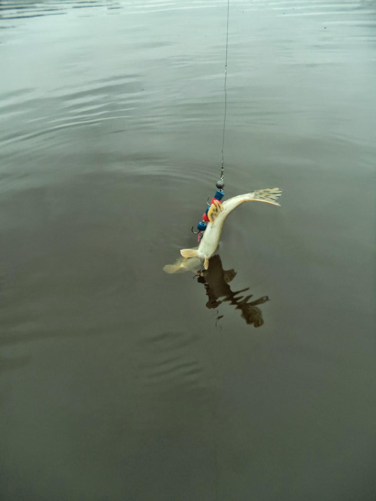 рыбалка на мандулу летом