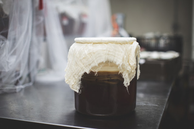 kombucha tanks, SCOBY floating on top