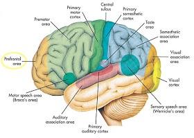 4 Tips Menjaga Kesehatan Otak Anda