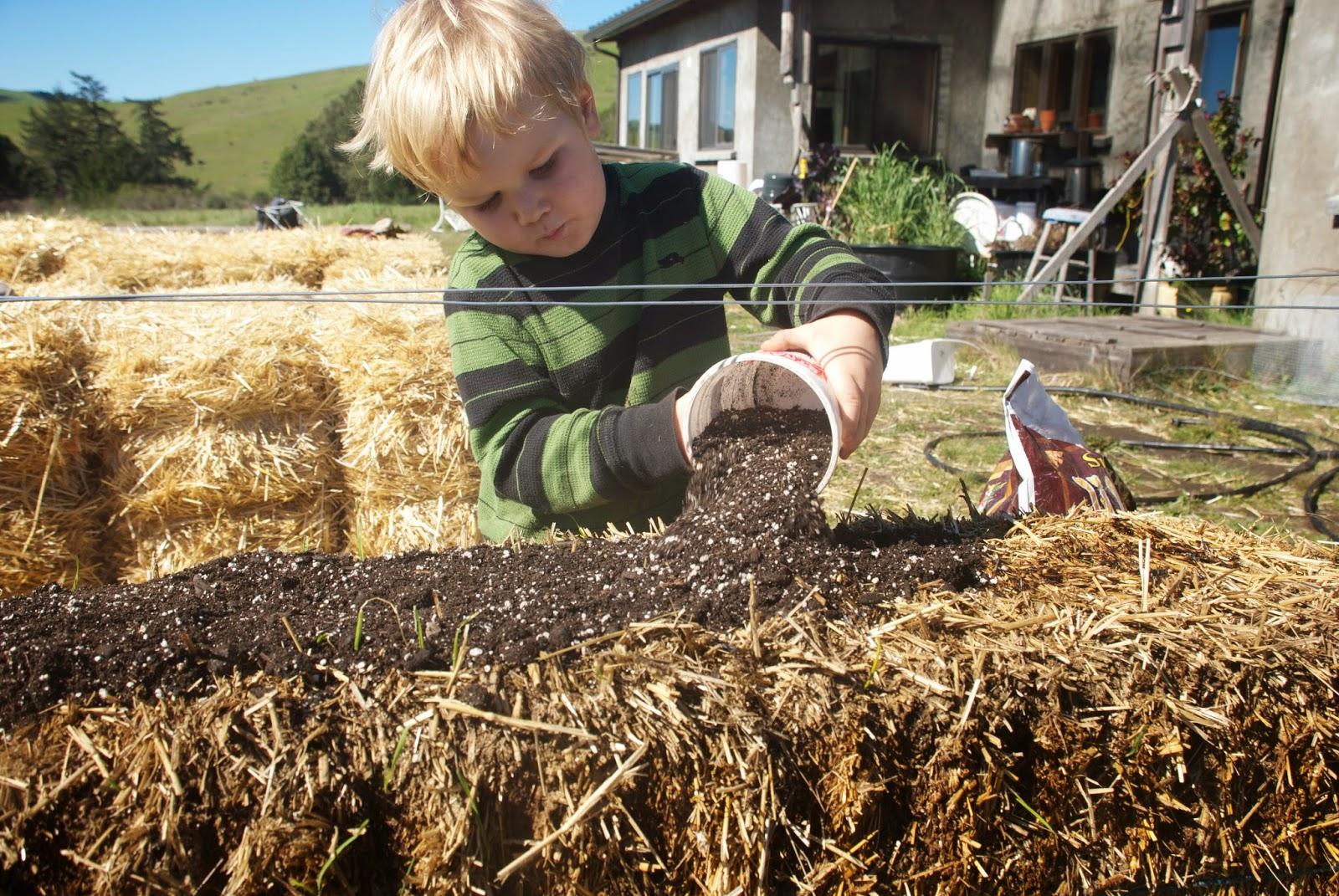 California Homesteading: Planting the Straw Bale Garden