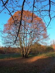 Unser Wunschtraumbaum im Herbst