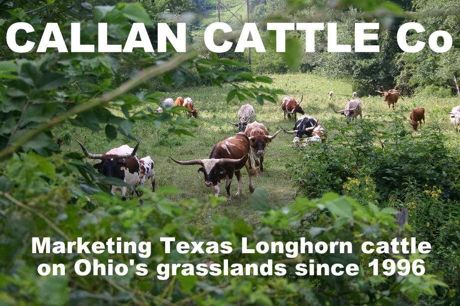 CALLAN CATTLE Co