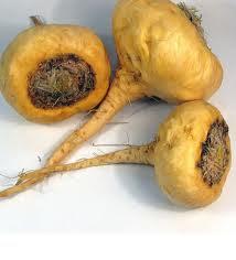 Maca andina o maca del Perú - Viagra natural