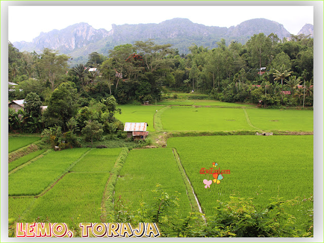 view pemandangan di toraja