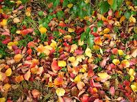 herfst bladen