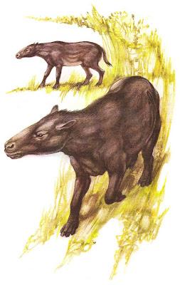 perissodactyla del Eoceno Hyrachyus