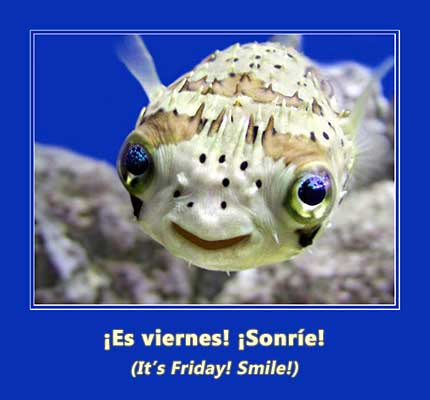 cute smiling fish