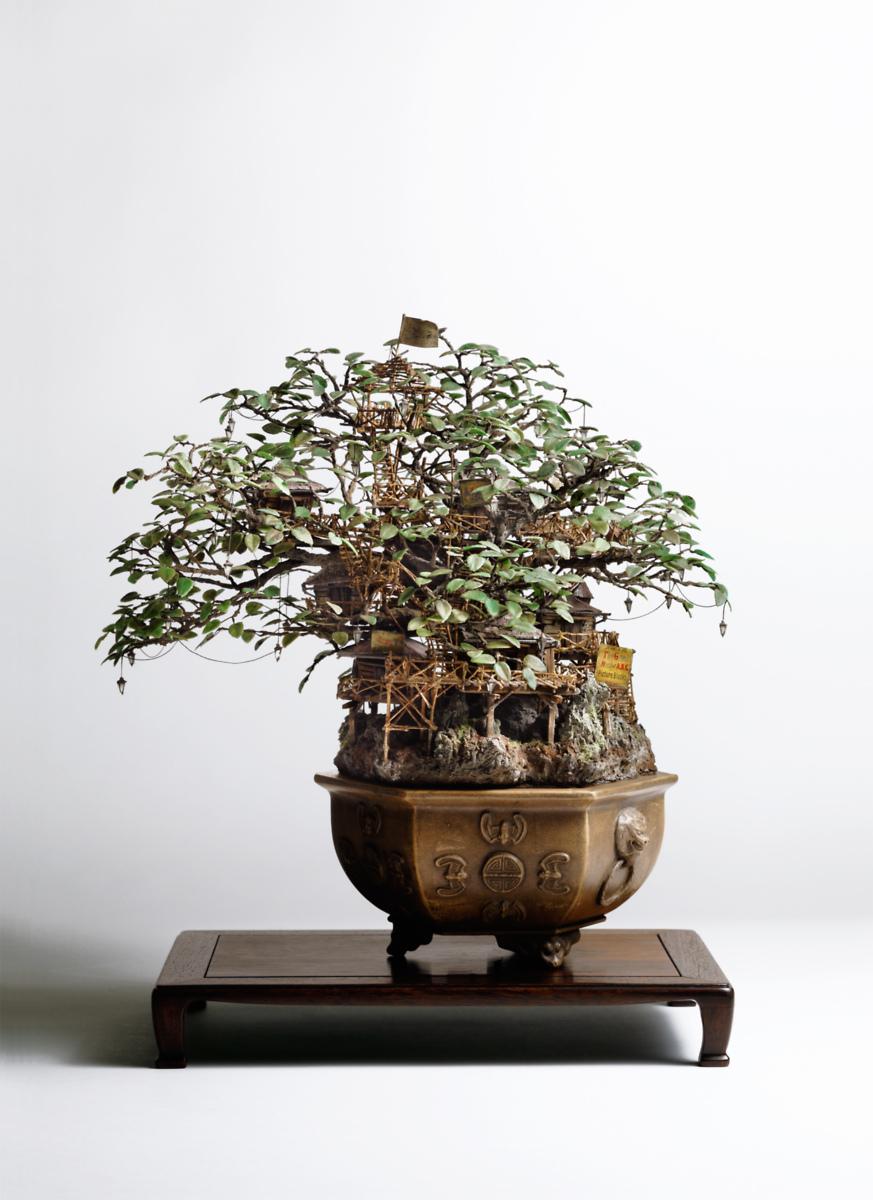It39s Life Takanori Aiba Bonsai Artist