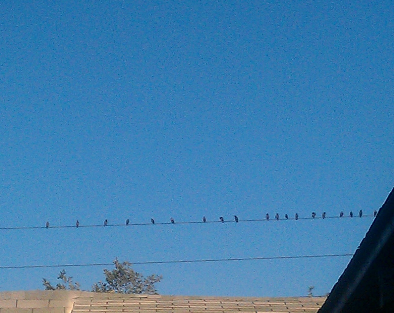 Kitchen and Residential Design: The starlings are back, it must be ...