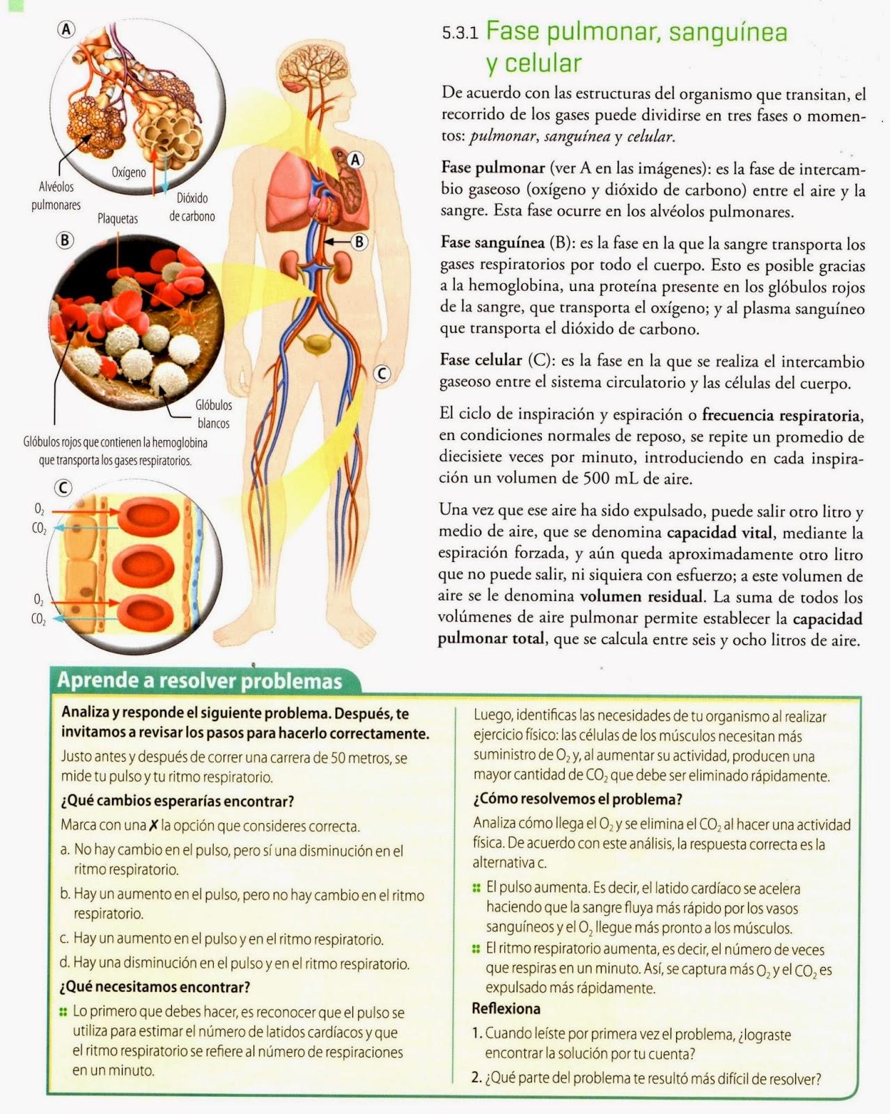 Propiedades físicas de los pulmones | LAS TICS EN LAS CIENCIAS NATURALES