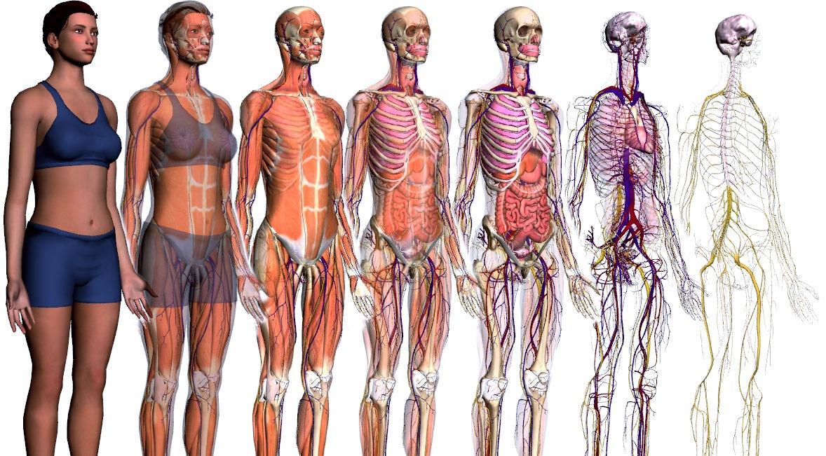 Que  P  Em O Corpo Humano Para O 5   Ano Do Ensino Fundamental