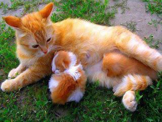 Kebohongan Publik Tentang Mitos Kucing Hewan Kesayangan Nabi
