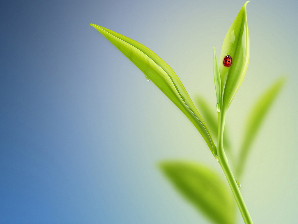 http://1.bp.blogspot.com/-S3ytxEdgLyI/T-9Ng74NWzI/AAAAAAAAAL8/YDll8I5A2hA/s1600/Nature\'s_-_Windows_7_Wallpaper.jpg