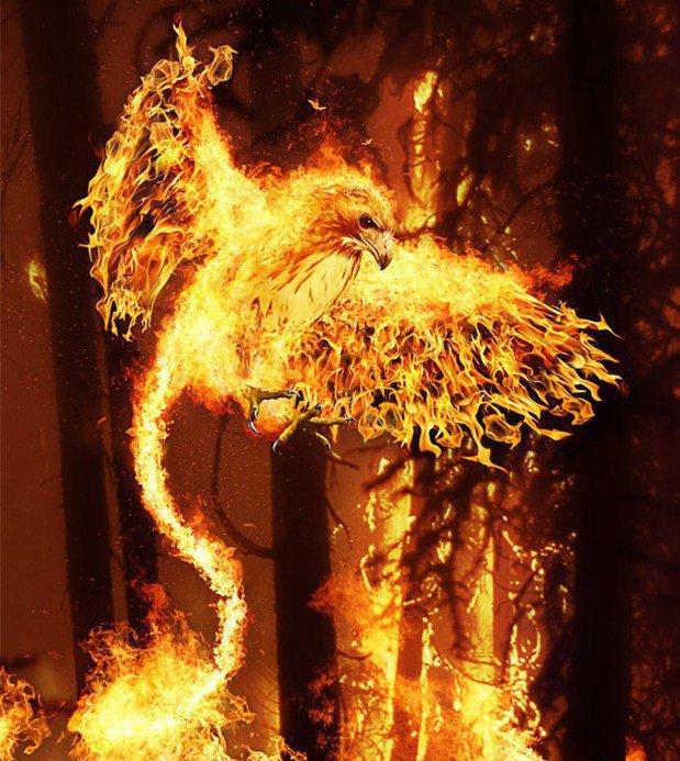 La décision du Phénix Aigle+de+feu