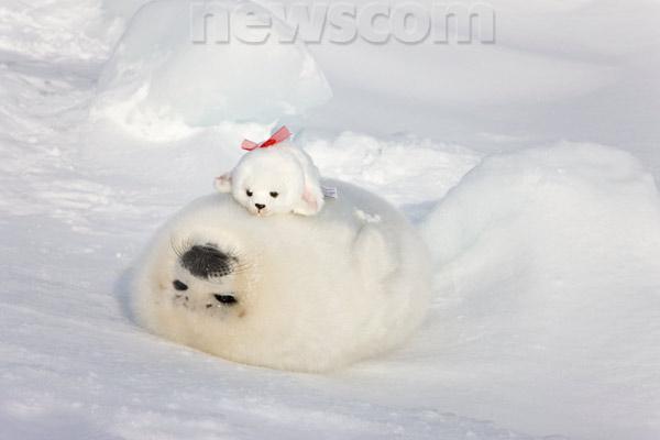 the none1 arctic animals