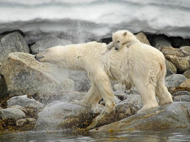 Wonderful Animals Closeup Digital photography ~ FunGur.BlogSpot.com