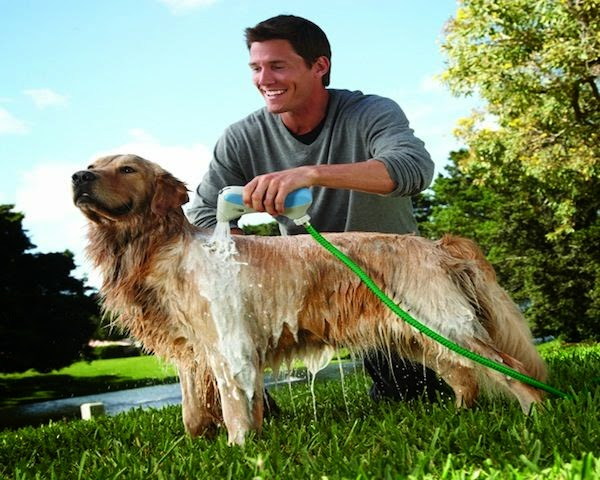 Must Have Gadgets For Dog Owners (15) 9