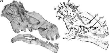 Tapuiasaurus dinosaurios en america