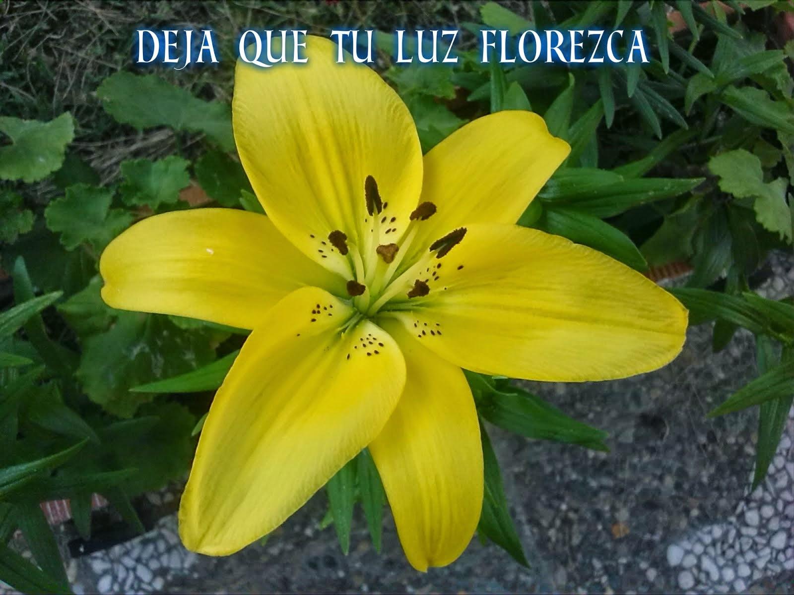 Deja que tu luz florezca
