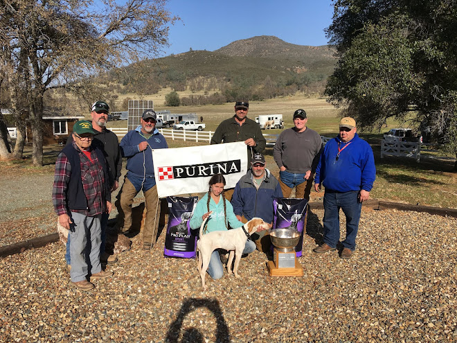2017 Region 11 Amateur Shooting Dog Championship - Moonlight Ranch - West Valley Bird Dog Club