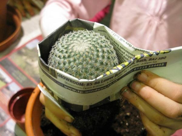 plantas de interior, flores, cactus, orquídeas, plantas de interior fáciles de cuidar