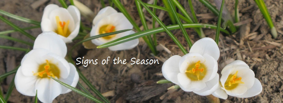 signs of the season