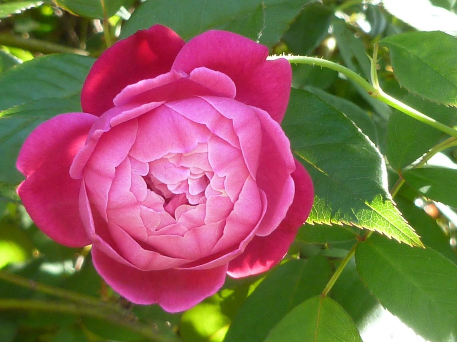 Maui Jungalow A Rare Flower On Maui