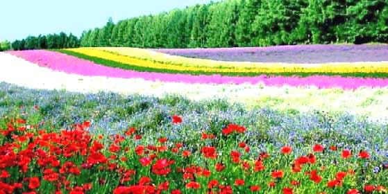 Beautiful flower garden amazing wallpapers for Amazing flower gardens