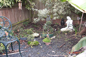 Some of the bonsai kept outdoors