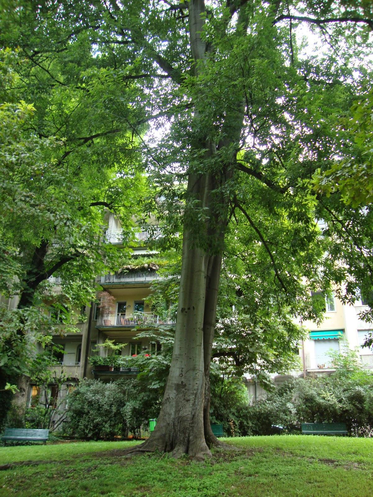 Un piccolo giardino in citt alla scoperta dei giardini - Cespugli da giardino ...