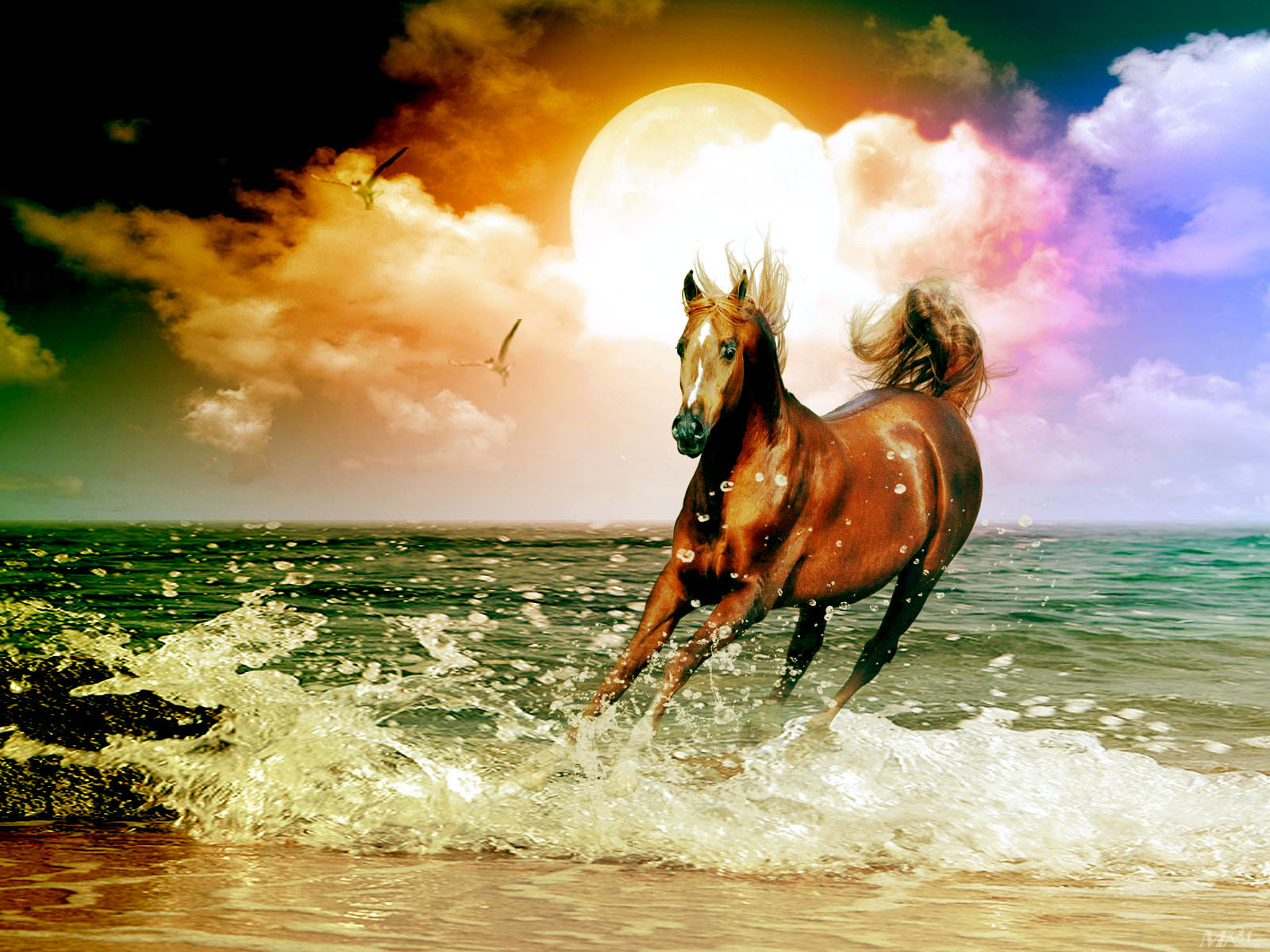 Water horse wallpaper - photo#13