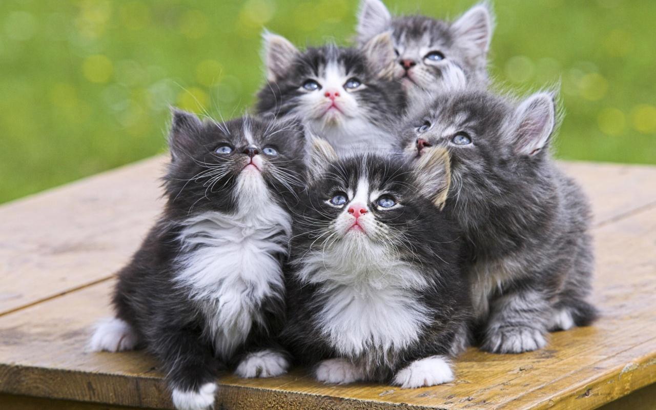 http://1.bp.blogspot.com/-S6GHdgHaTmQ/T-nvJkqarnI/AAAAAAAAAdI/18VhnE5ifGU/s1600/cute-cats-39-1280x800.jpg