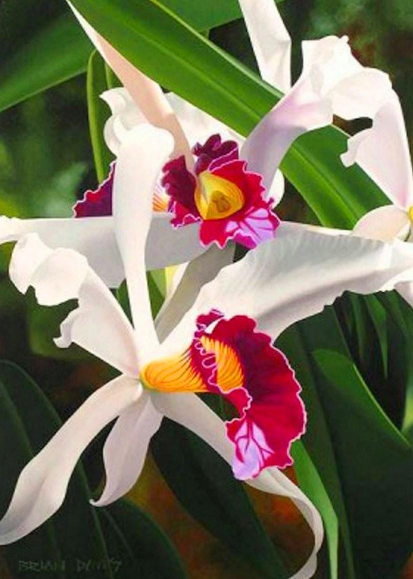 Pintados Con Flores Arte En Pinturas De Flores Pinturas De Flores