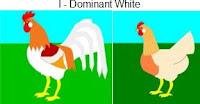 I-dominantwhite.jpg
