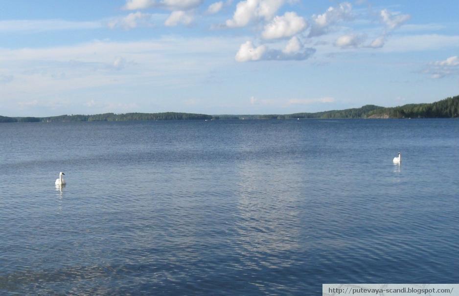 лебеди на озере Весиярви