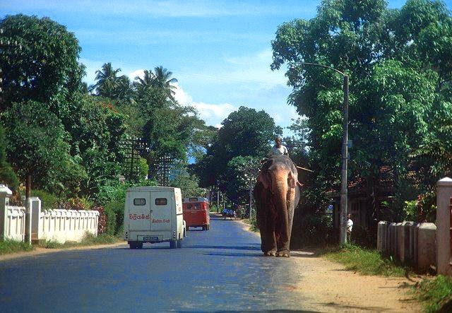Old Sri Lanka Photo Collection