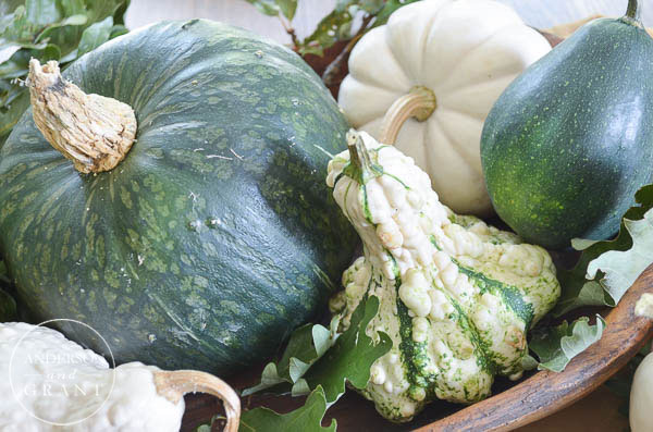 Look for interesting gourds, squash, and pumpkins to create a unique centerpiece.  |  www.andersonandgrant.com