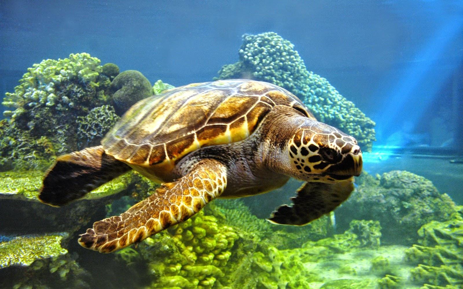 Sea Turtle - HD Wallpapers | Earth Blog