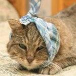 Les indicateurs de santé chez le chat