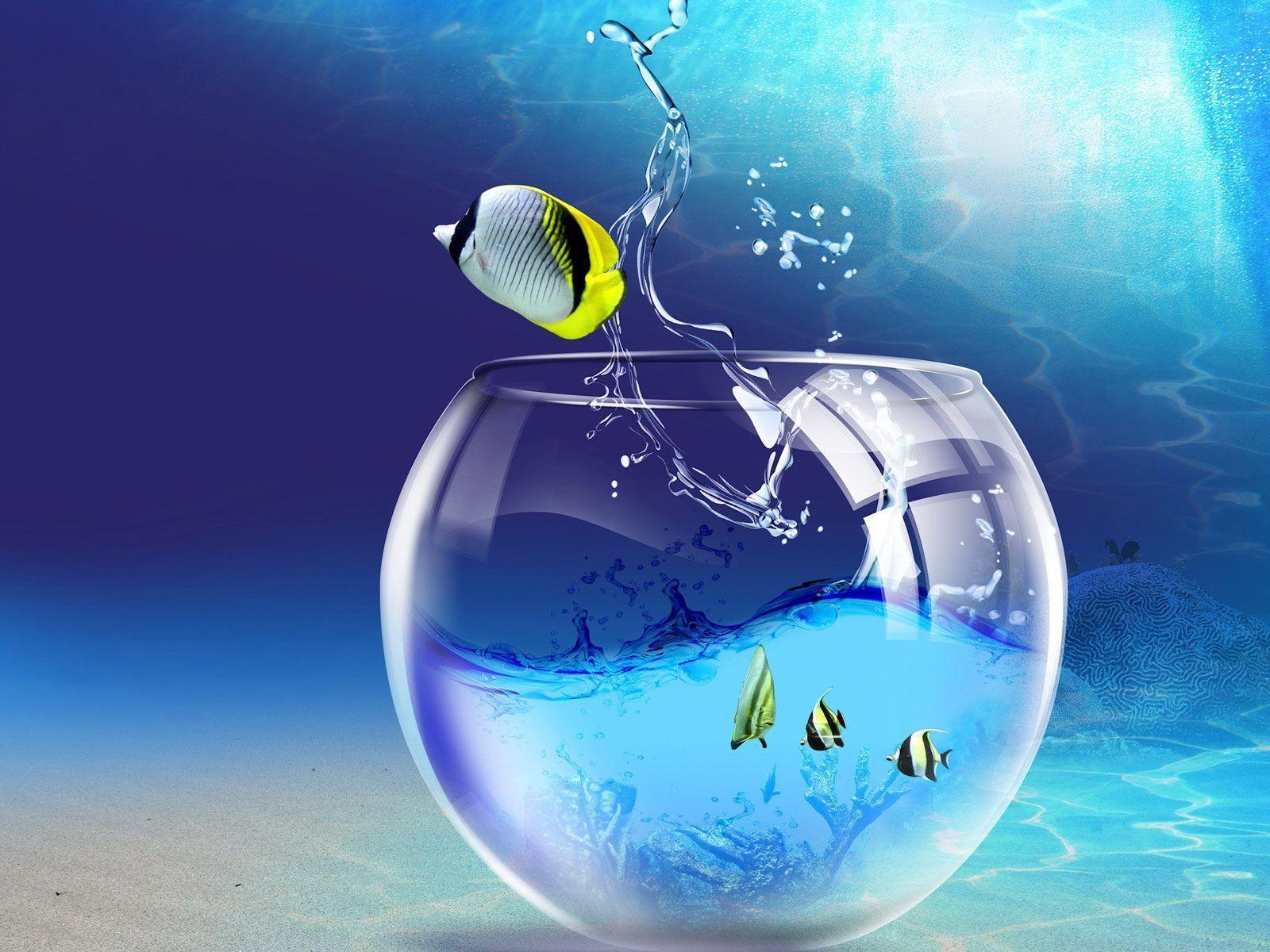 Marine Aquariums Fish Bowl