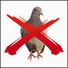 pest control pigeon