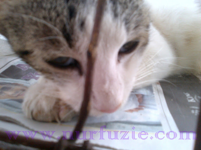 10 Tanda Mungkin Kucing Stress (Tertekan)