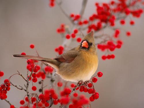 gambar wallpaper burung