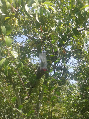 Fotografia de armadilha para vespas