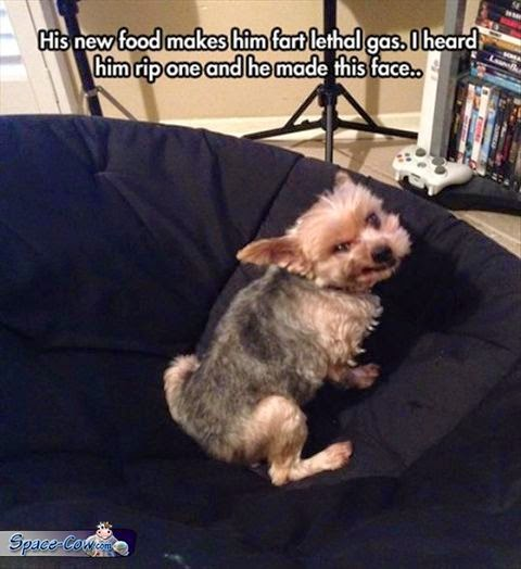 funny dog fart picture