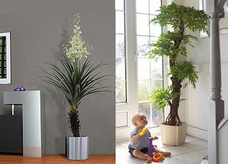 Plantas, Como Cuidarlas